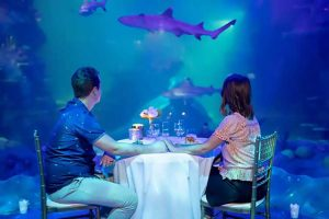 Sealife Sydney Aquarium Banner